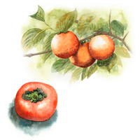 柿の木と実