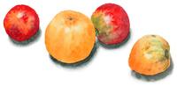 黄色と赤のトマト