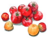 赤と黄色のトマト