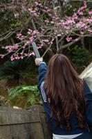 桜の木に証書筒を向ける女学生の後ろ姿