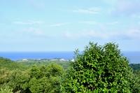 パールロードから見た夏の海