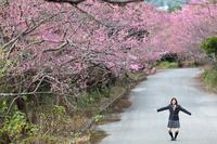 桜並木と女学生