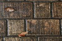 濡れた石畳の落ち葉