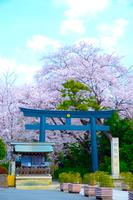 満開の桜と松陰神社