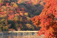 京都 渡月橋の紅葉