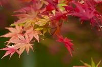 狭山湖の秋