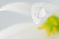 花びらと水滴