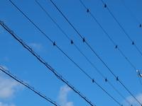 鳥避け電線