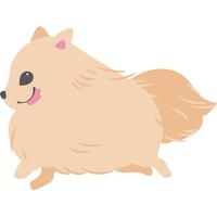 走る犬(ポメラニアン)