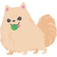 ボールで遊んでいる犬(ポメラニアン)