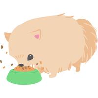 餌を食べている犬(ポメラニアン)