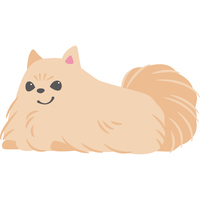 伏せをしている犬(ポメラニアン)