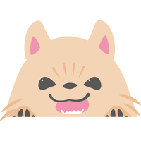 ひょっこりと顔を出す犬(ポメラニアン)