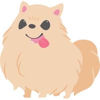 舌を出している犬(ポメラニアン)