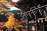 京都 秋の善峰寺