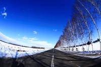 真冬の白樺並木道