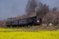 春の真岡鉄道
