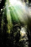 霧のたちこめた森