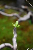 枯れ木から新芽