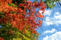 日光の紅葉