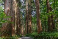 戸隠神社奥社参道の杉並木