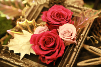 金色の額縁と薔薇の花