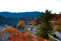 奈良長谷寺総本山