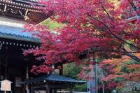 京都 今熊野観音寺の紅葉