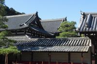 京都 泉涌寺 伽藍の屋根
