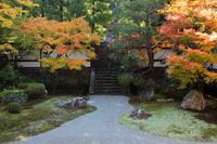 京都 泉涌寺 御座所庭園の紅葉