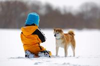 柴犬と雪遊び