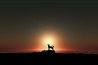日の出を見る犬のシルエット