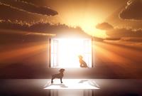 光が射し込む窓と犬のシルエット