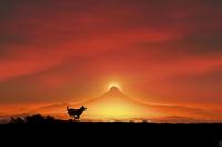 富士山の日の出と走る犬