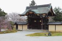 京都 大覚寺 勅使門