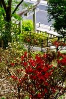 織姫神社の春