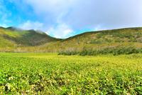 羅臼湖歩道のササの草原