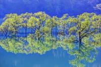 新緑の白川湖