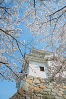 白石城春景色