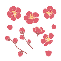 梅の花_素材