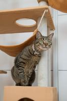 猫タワーに乗る猫