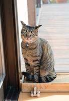 サンルームの猫
