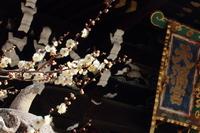 京都 北野天満宮の白梅