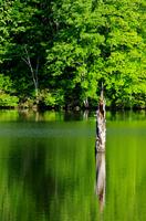 新緑の鏡池
