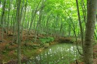 新緑の美人林