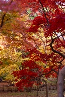 秋の神代植物公園