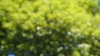 緑の木ーぼかし