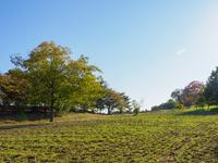 昭和記念公園 紅葉