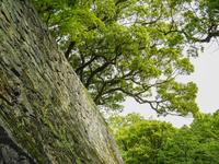 熊本県 熊本城 石垣