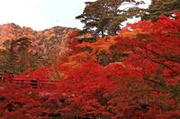 弥彦公園の公園